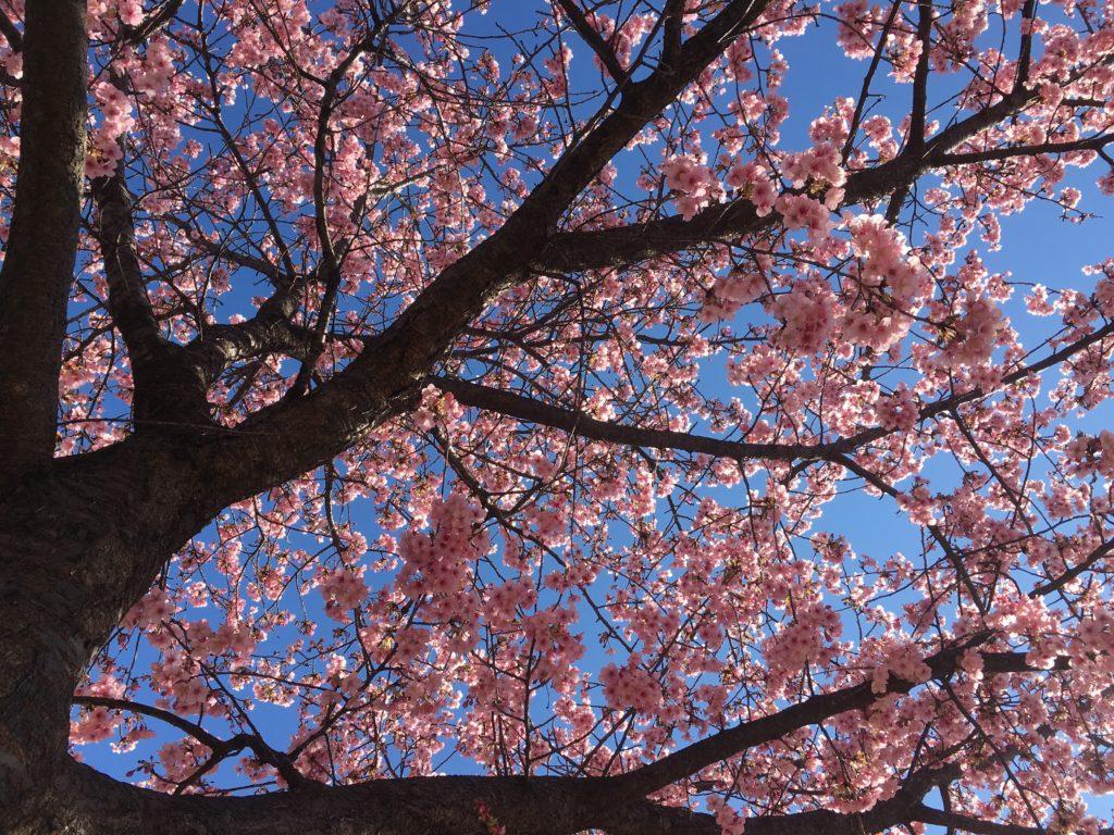 春はもうすぐ♬